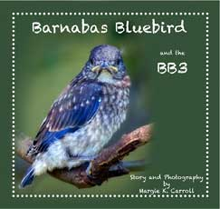 margie k carroll childrens books barnabas bluebird